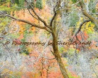 "Fall Spectrum - ""12 x 18"" Signed Fine Art Photograph"