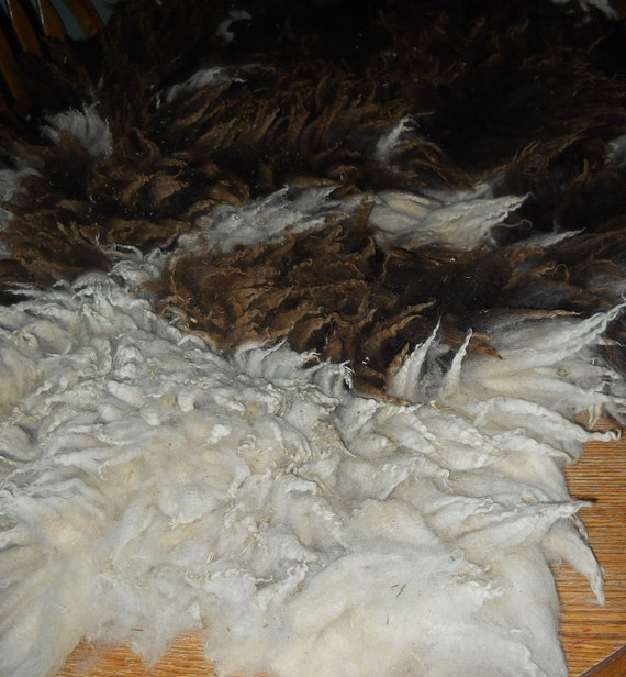 Blossom's Natural  Raw Jacob Sheep Fleece Black White Brown