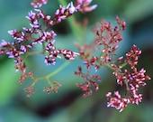 Fine art botanical nature photo purple pink bud tiny flowers branch green macro - Found