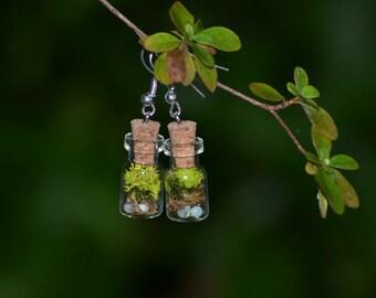 Terrarium Earrings