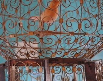 Orange Bird In A Rusted Ornate Metal Bird Cage, Fine Art Photography Print, Blue,  Metal Birdcage Home Decor, Wall Art, Photo Prints