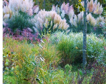 Grasses In An English Garden, Fine Art Photography Print, English Landscape, Nature Photography,  Unique Home Decor, Wall Art, Photo Prints