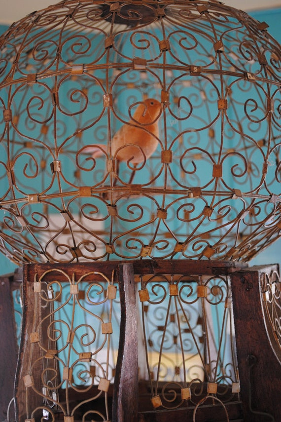 Orange Bird In A Rusted Ornate Metal Bird Cage, Fine Art Photography Print, Blue,  Metal Birdcage Home Decor, Wall Art, Photo Prints