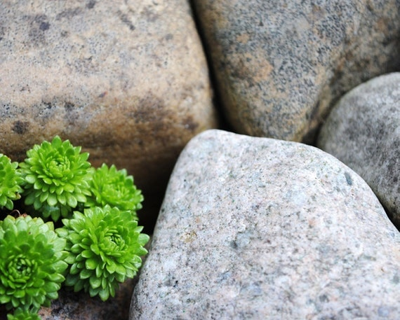 Green vs Gray, Plant And Stone Detail, Fine Art Photography Print, Nature Photography,  Unique Home Decor, Wall Art, Gifts, Photo Prints
