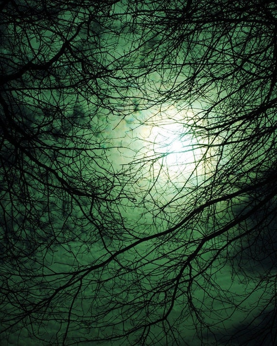 Light Seen Through Dark Branches, Fine Art Photography Print, Dark Night, Moonlight Night Photography, Spooky, Unique Home Decor, Wall Art