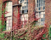 Photograph 5 x 7 Old Factory Windows broken glass , Repurposed building ,Red , Ivy