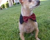 Custom Satin Interchangeable Dog Bow Tie & Collar Set