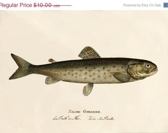 Antique Fish Art Print - 7 x 5 - La Truite de Mer, Sea Trout
