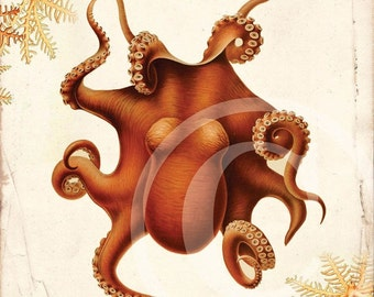Antique Octopus Art Collage Print - 8 x 10 - Giant Pacific Octopus