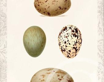 Antique Bird Egg - Art Collage Print - 5 x 7 - Bird Eggs