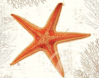 Starfish Collage Art Print - 8 x 10 - Starfish Collage