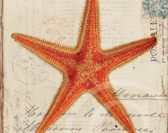 Antique Starfish Art Print - 5 x 7 - Starfish Collage