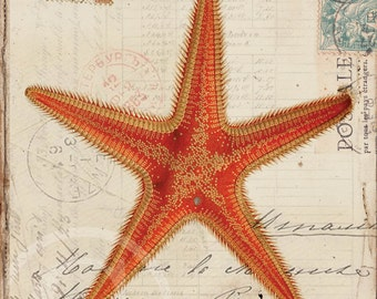 Antique Starfish Art Print - 8 x 10 - Starfish Collage