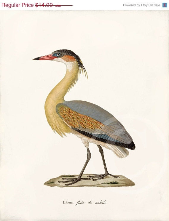 Summer Sale Antique Bird Art Print - 8x10 - Heron soleil