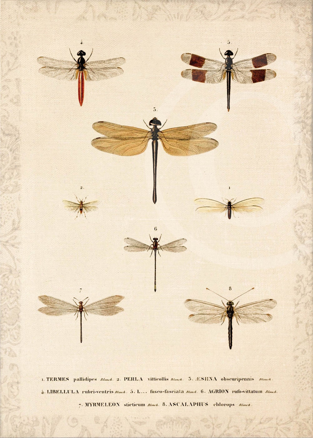dragonfly pictures to print