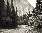 "Original Photograph - El Capitan B&W -  8"" x 10"""