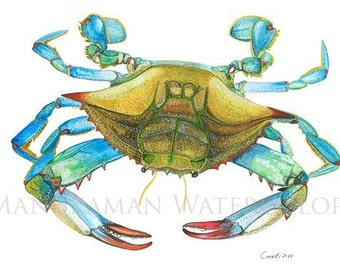 Blue crab Watercolor print by Damon Crook (print sized for opening in a 11 x 14 matt)