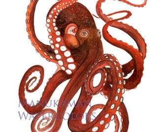 Pacific Octopus print of original Watercolor painting by Damon Crook (11 x 14 size)