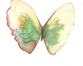 Pale green yellow and white gold butterfly with rust rimmed wing