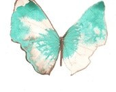 pale white brown butterfly with turquoise green