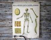 Anatomy and Physiology Charts - W. & A.K. Johnston - Set of 8