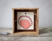Pink Seashell : Reclaimed Wood Display Box & Vintage Peg Card