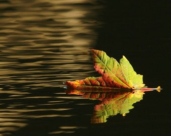 Autumn Leaf Photo,Leaf afloat, home decor, wall decor
