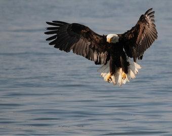 Eagle Photo, Eagle incoming, home decor, wall decor, Forest decor, American Eagle, Bird decor