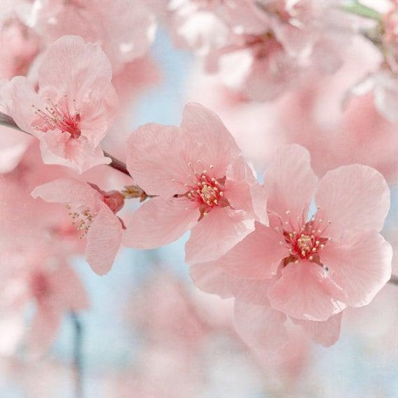Pastel Pink Flower Photograph Art Print By Marascaphotography