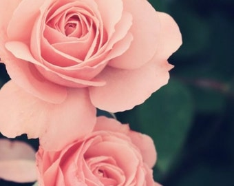 Rose Photography, Shabby Chic Photo. Pink Rose Photo, Nature Photography, Large Wall Art, Flower Photography, Flower Print, Floral Photo