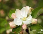 Cherry blossom art, Set of 2 prints, Nature photography, Apple tree, White flower, Flower print, Green and White, Bedroom wall art