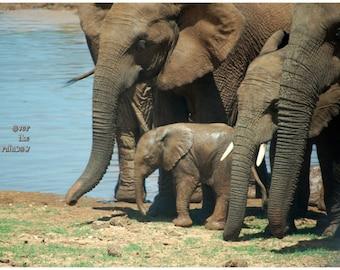 Baby Elephant print, Elephant photography, Nature photography, Animal print, Wildlife photography, Safari nursery décor, Baby animal picture