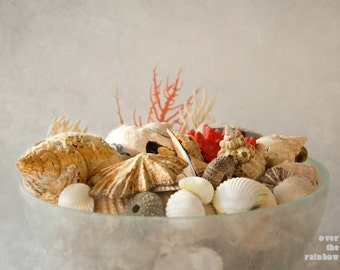 Sea shell photograph, Coastal Wall art, Seashells in a bowl, Beach photography, Beige neutral pastel, Bathroom décor, Ocean Print
