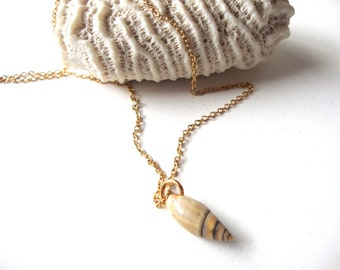 Vintage Seashell Necklace : Bitty vintage seashell necklace on a gold tone chain