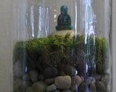 "Meditating Budha in ""no-care"" jar terrarium"