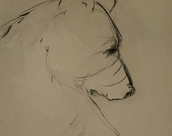 black bear line drawing,a reproduction of the original painting by Mona Cordell of MJCwildlifeart