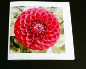 Red Dahlia Flower Greetings Card/Notelet Blank for your own message any occasion