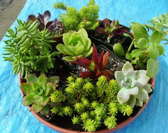SIX months of plants. Great as a gift or for yourself. Receive a different plant each month.