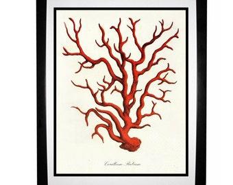 Red Coral Vintage Style Nautical Art Print Beach House Decor