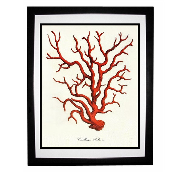 Red Coral Vintage Style Nautical Art Print Beach House Decor