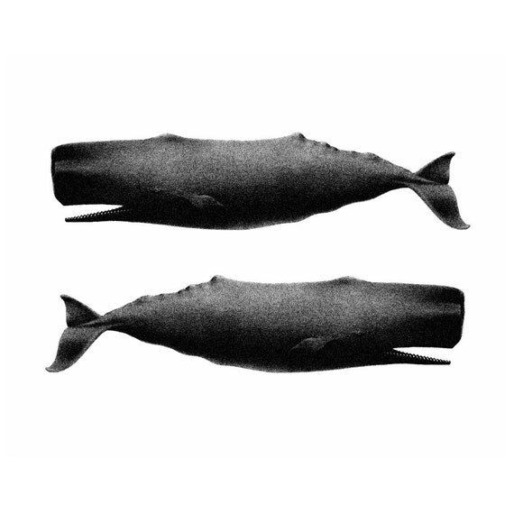 Twin Whales Nautical Vintage Style Art Print Beach House Decor Black and White