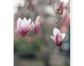 for the love of magnolias - 5x7 fine art photo