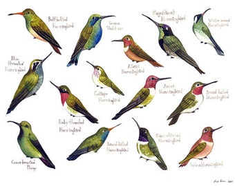 Hummingbirds of North America Birds Field Guide Style Watercolor Painting Print