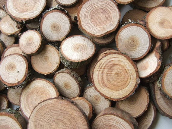 Wood Supplies 50 Small Wooden Larch Slices. 3/4 to 1 1/2 inches. Button and Bead blanks.