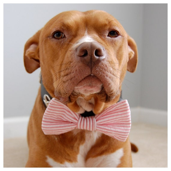 Seersucker Boys Will Be Boys Bow Tie Collar Accessory for Pets