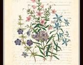 Antique Botanical - Flower Garden Series with French Script - Plate 9 - British Botanical Art Print 8 x 10 Digital Collage