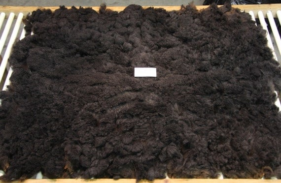 Charcoal-Brown Romney Fleece - Coated Raw Wool - Very Clean - 5.25  pounds
