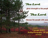 """MAGNET - 5.59"""" x 4.33"""" - Trees and Plains of Dolly Sods with Bible Verse"""