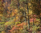 Fall Trees in the Mountains on Skyline Dr -Virginia