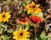 Arizona Sun - Flowers in Virginia